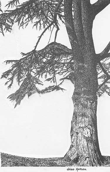 Drawing of Tree by Chico